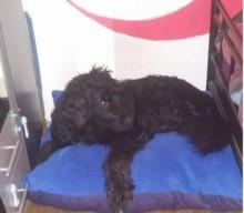 [miDoggy Parade] Hund im Bett – ja oder nein?
