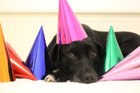 Happy Birthday! – Hunde-Muffins aus dem Thermomix