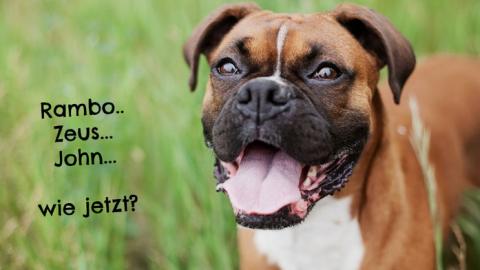 """Warum """"Schatz"""" kein guter Hundename ist?"""