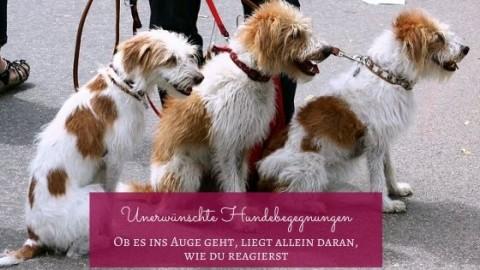 Unkontrollierte Hundebegegnungen