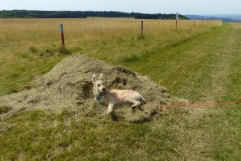 Blogparade: Oh, du schlimmer Hund!