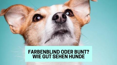 Farbenblind oder bunt? Wie gut sehen unsere Hunde wirklich?