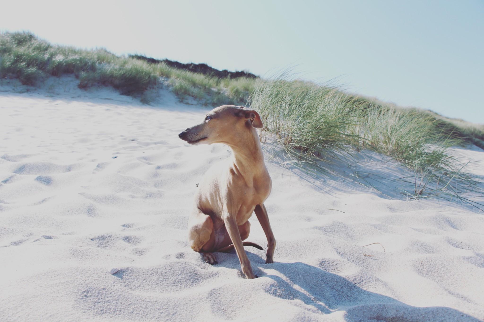 Urlaub mit Hund auf Sylt Tipps Restauarant Hotel Strand