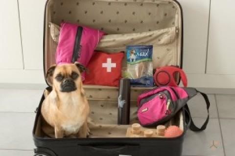 Urlaub ohne Hund – Teil 1 Vorbereitung