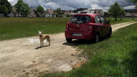 miDoggy Parade: Autofahren mit Hund – so klappt's