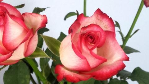 Love is in the air oder ein Valentinsspecial