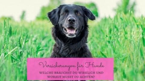 Versicherungen für Hundehalter – Welche brauchst du wirklich und worauf solltest du achten?