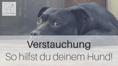 Verstauchung beim Hund – woran man sie erkennt und wie man richtig handelt