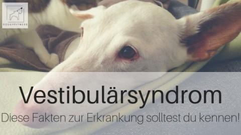 Vestibulärsyndrom beim Hund – die wichtigsten Fakten zur Erkrankung!