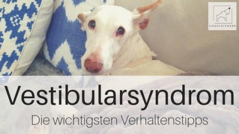 Vestibularsyndrom beim Hund – die wichtigsten Verhaltenstipps