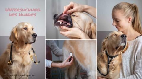 Vitalparameter beim Hund