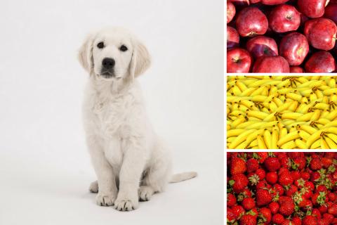 Vitaminreiche Früchte für Hunde