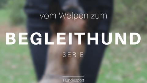Vom Welpen zum Begleithund – Teil fünf | Hieeer! und die liebe Pubertät