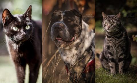 Vorsätze? Wunderbare Helfer für dein Leben mit Tieren