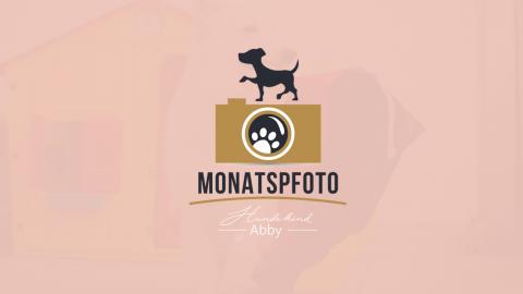 Monatspfoto Juni – FußballWM
