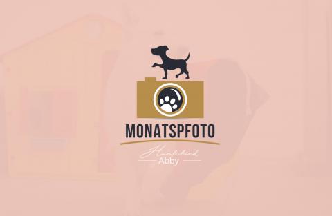 MONATSPFOTO OKTOBER || WERBUNG