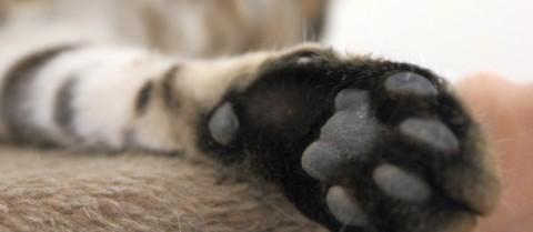 Miau Mio die Katzen oder [MiDoggy Parade] Alle unter einem Dach – So klappt die tierische WG