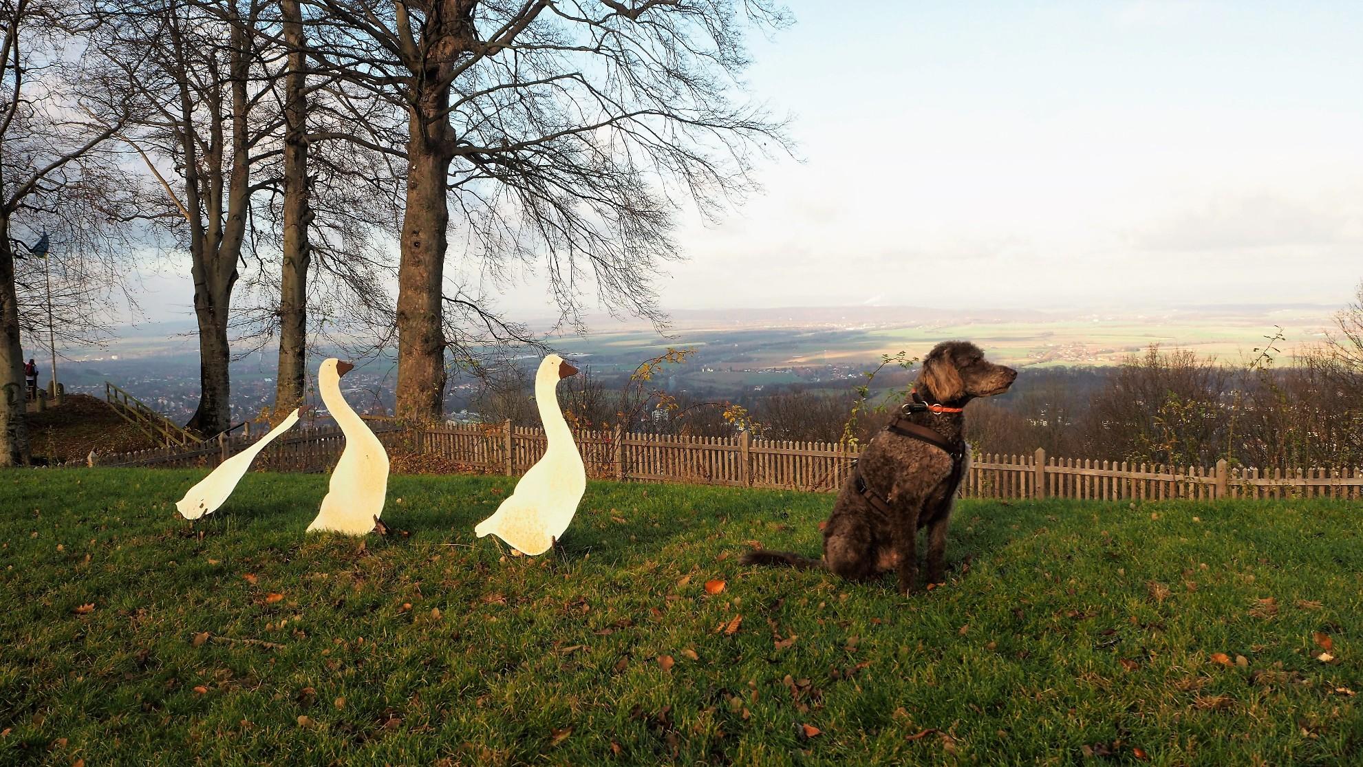 Wandern mit Hund - eine Runde Bad Harzburg