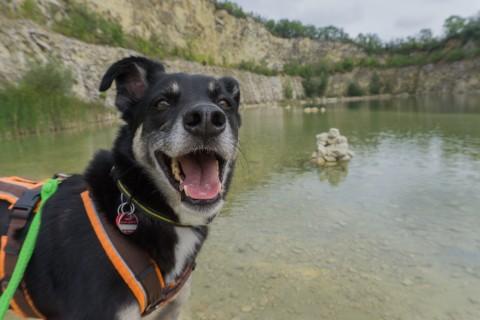 Südmähren: eine kleine Traumtour mit Hund