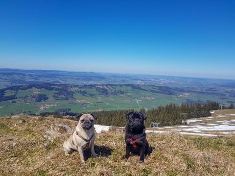Wandern mit kleinem Hund – so klappt es