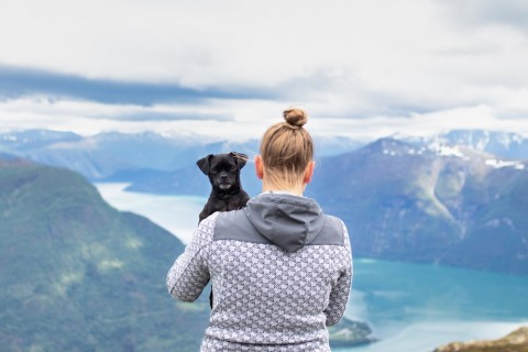 Auf einen Blick: Mit Hund nach Norwegen