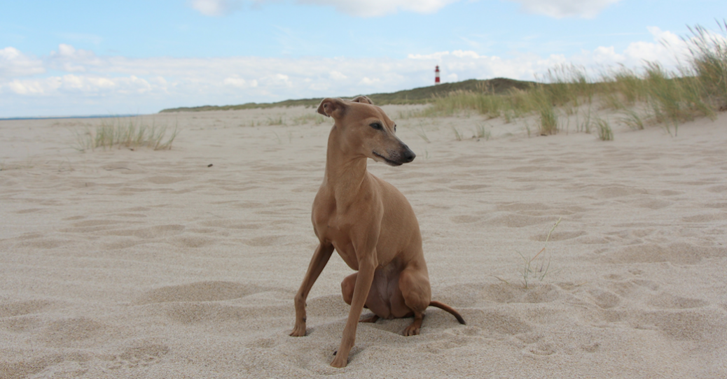 Warum du mit Hund Urlaub machen solltest