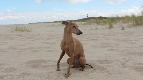 Warum du MIT deinem Hund Urlaub machen solltest