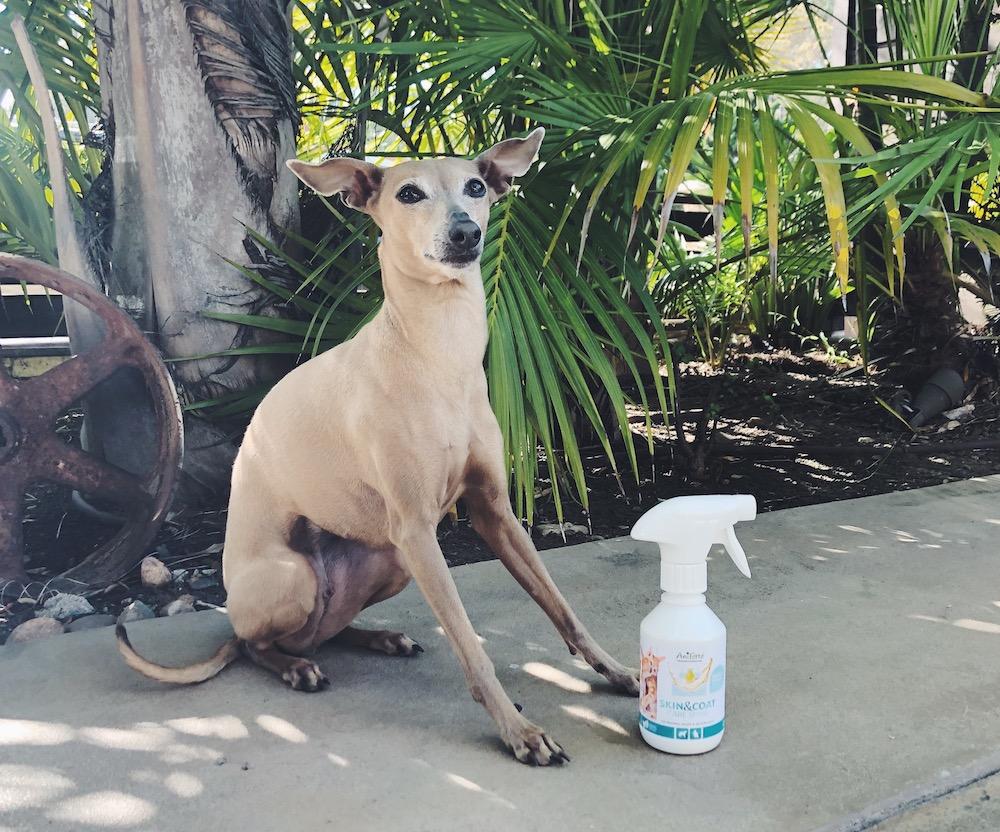 Warum braucht mein Hund einen Hundemantel
