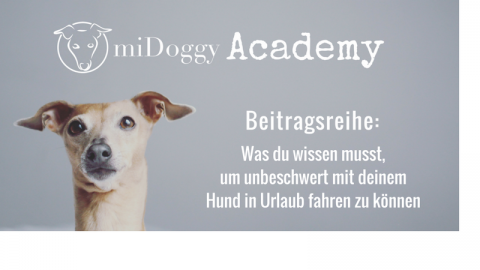 """midoggy-Academy: Was du zum Thema """"Urlaub mit Hund"""" unbedingt wissen solltest"""