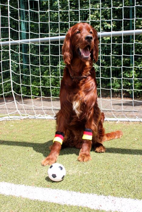 EM Accessoires Hund