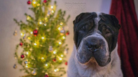 Weihnachtsgeschenke – für Hund & Halter + Verlosung [Werbung]
