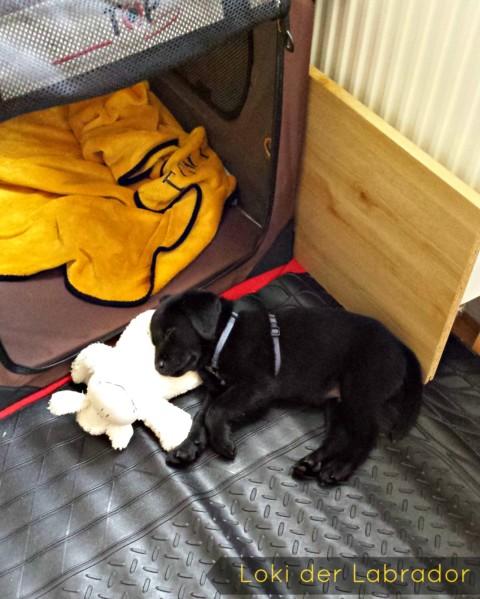 Darf der Hund mit ins Bett? [miDoggy Parade]