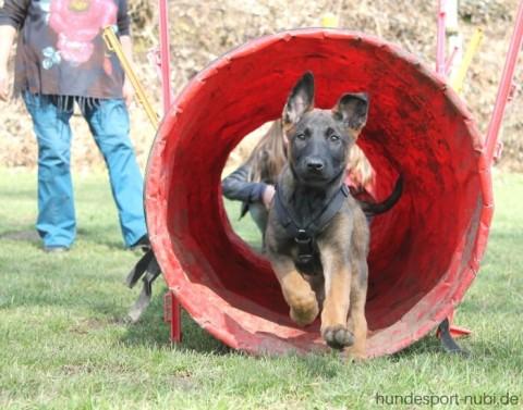 Welpen und Hundesport – wie viel und welches Training ist sinnvoll?