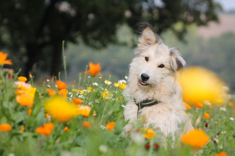 Ein Hund aus dem Tierheim – Interview mit Christin
