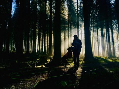 Mit vier Hunden im Westerwald: Kuchenglück und Freudentränen