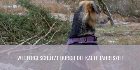 Passender Mantel für den Hund?