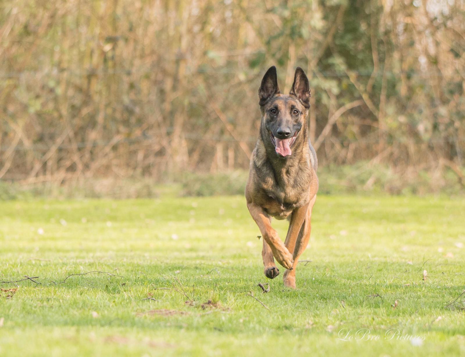 Vom Welpen zum Begleithund – Teil sieben | Das erste Turnier - Hundesport Nubi