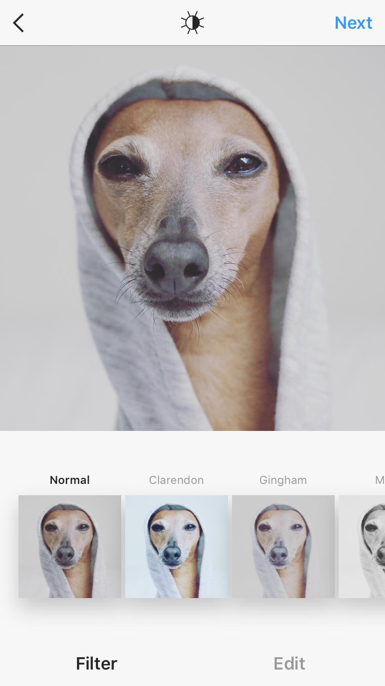 Wie bekomme ich schöne Fotos von meinem Hund mit Instagram Filtern?