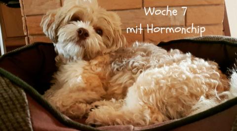 Woche 7 mit Hormonchip: Erfahrungsbericht Teil 2