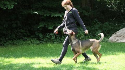 Vom Welpen zum Begleithund – Teil acht | Fußlaufen