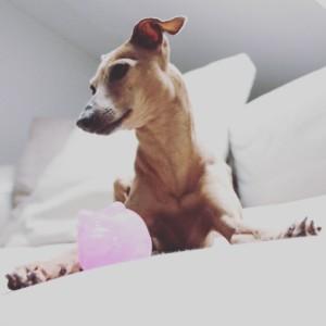Wurfspielzeug Hund