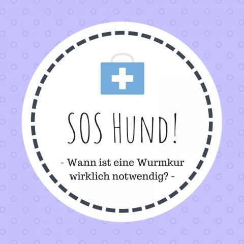 SOS Hund: Wann ist eine Wurmkur wirklich notwendig [Enthält Werbung]