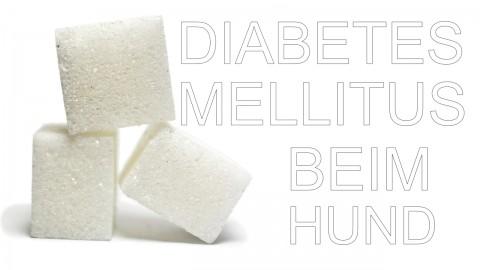 Zu viel Torte gefressen? Diabetes mellitus beim Hund