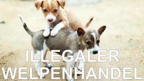 Der Bundestagsabgeordneter Kai Wegner (CDU) über den illegalen Welpenhandel