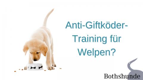 Anti-Giftköder-Training für Welpen? Was tun, wenn der Welpe Alles ins Maul nimmt?