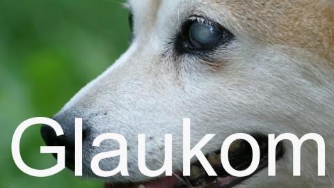 Plötzlich bind… das Glaukom