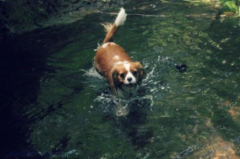[Gastbeitrag] Sommerbeschäftigungen mit Hund
