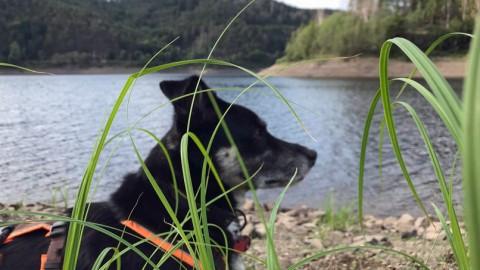 Zelten mit Hund: Der Harz ruft