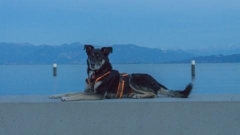 Zelten mit Hund: Fluch und Segen am Bodensee