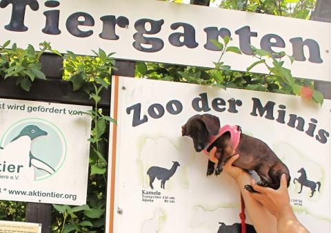 Unser Ausflugtipp mit Hund: Der Zoo der Minis in Aue